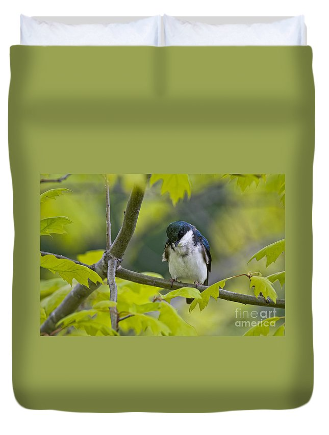 Tree Swallow Duvet Cover featuring the photograph Tree Swallow Pictures 39 by World Wildlife Photography