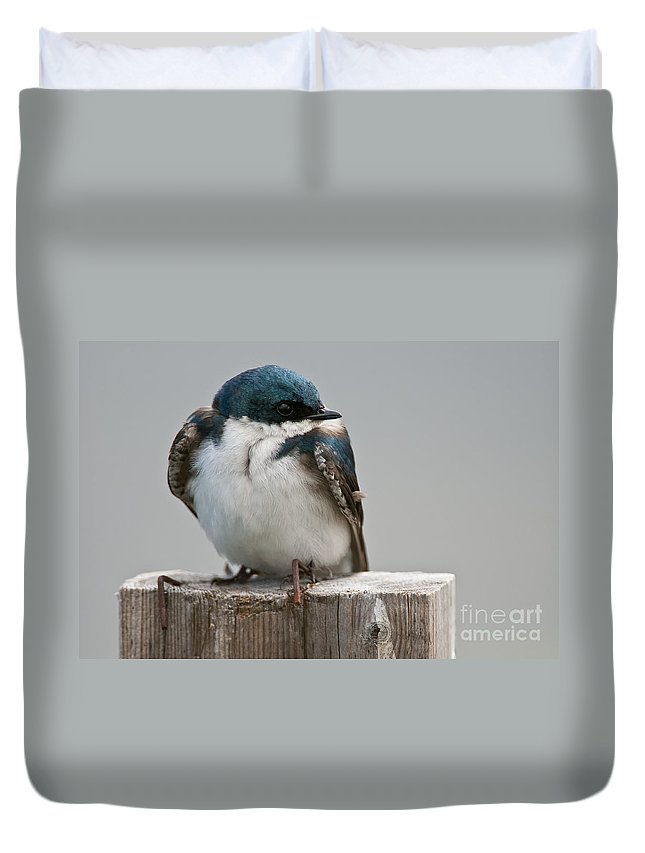 Tree Swallow Duvet Cover featuring the photograph Tree Swallow Pictures 47 by World Wildlife Photography