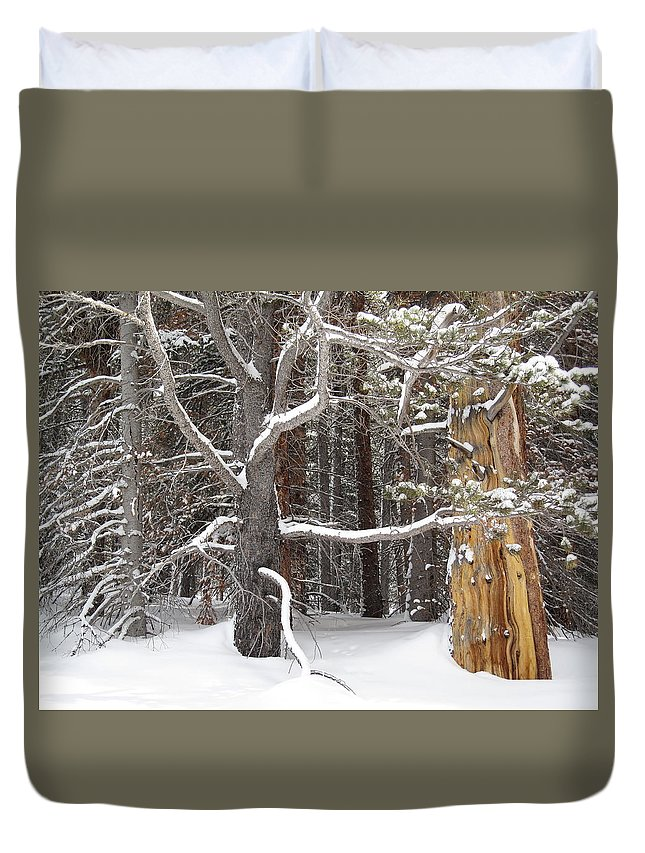 Landscape Duvet Cover featuring the photograph Tree Talk by Eric Glaser