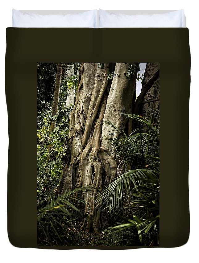 Tree Trunk Duvet Cover featuring the photograph Tree Trunk And Ferns by Belinda Greb