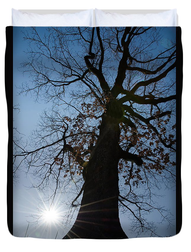 Tree Duvet Cover featuring the photograph Tree With Sun by Mats Silvan