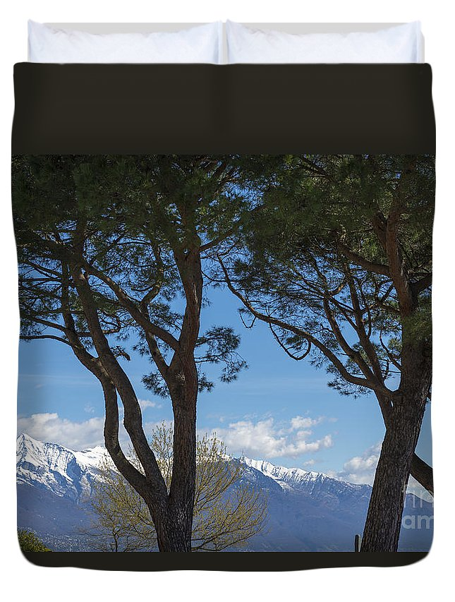 Trees Duvet Cover featuring the photograph Trees And Snow-capped Mountain by Mats Silvan