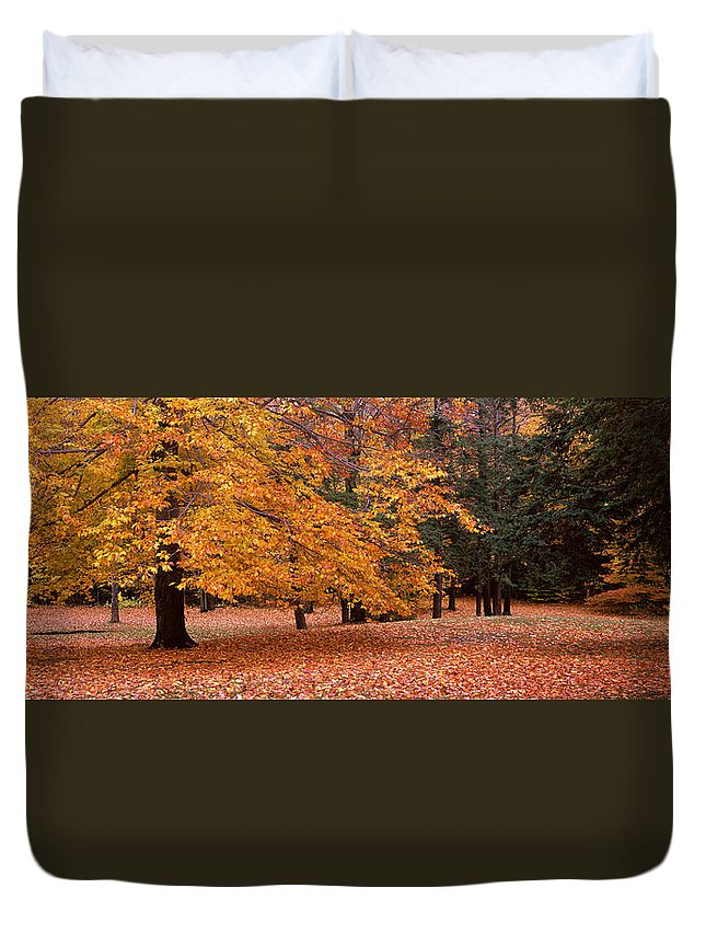 Photography Duvet Cover featuring the photograph Trees In A Park, Chestnut Ridge County by Panoramic Images