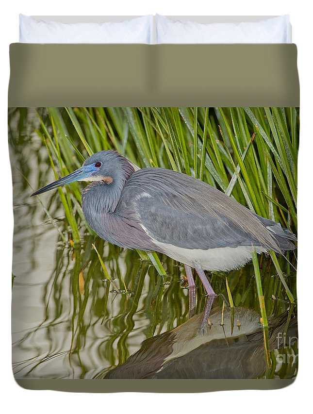 Tricolored Heron Duvet Cover featuring the photograph Tri-colored Heron by Anthony Mercieca