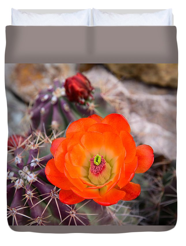Trichocereusm Duvet Cover featuring the photograph Trichocereus Cactus Flower by Michael Moriarty