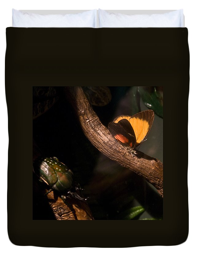Tropical Duvet Cover featuring the photograph Tropical Butterfly And Rhinoceros Beetle by Douglas Barnett