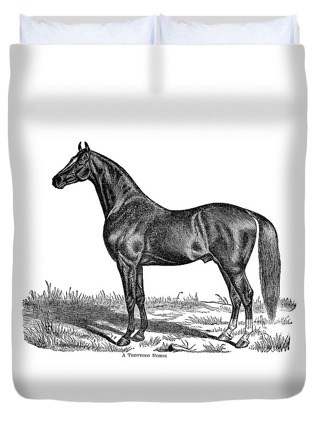Horse Duvet Cover featuring the digital art Trotting Horse Engraving by Nnehring