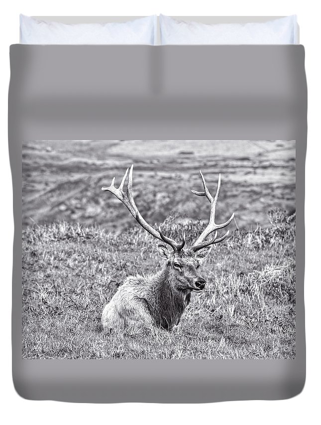 California Duvet Cover featuring the photograph Tule Elk In Black And White by Priya Ghose