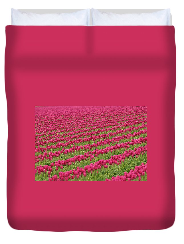 Tulips Duvet Cover featuring the photograph Tulip Festival In Mount Vernon by Peggy Collins