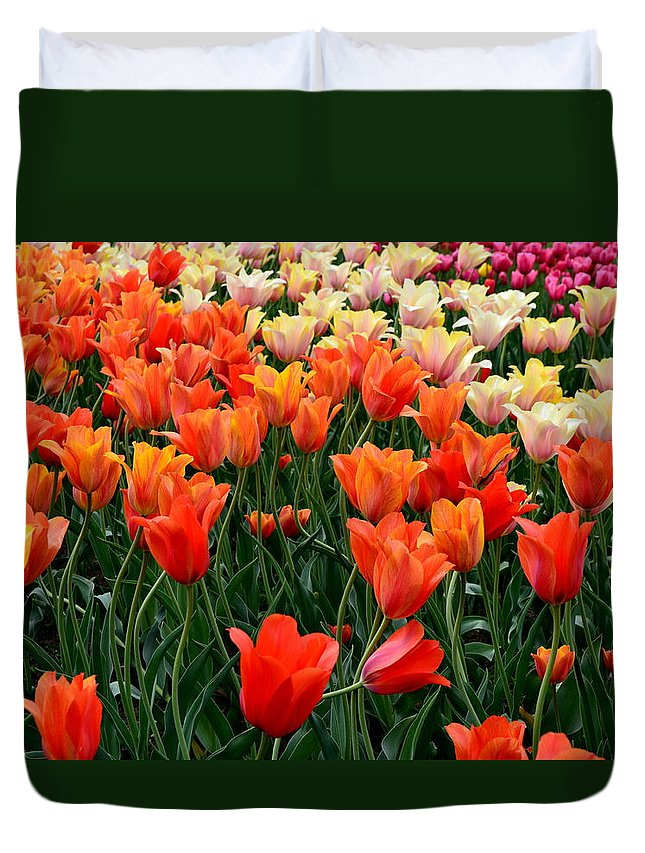 Hollander Duvet Cover featuring the photograph Tulip Field in Holland by Michelle Calkins