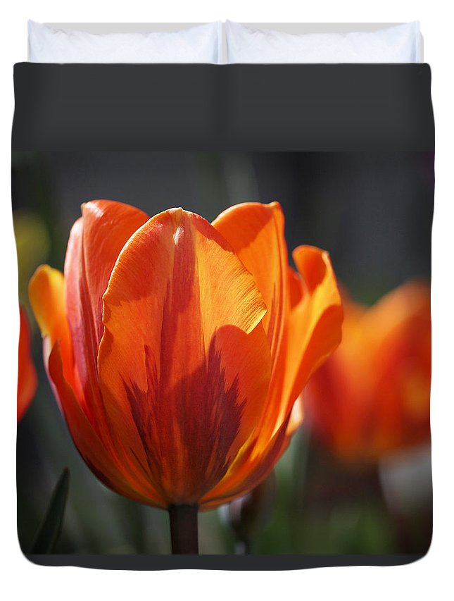 Tulips Duvet Cover featuring the photograph Tulip Prinses Irene by Rona Black