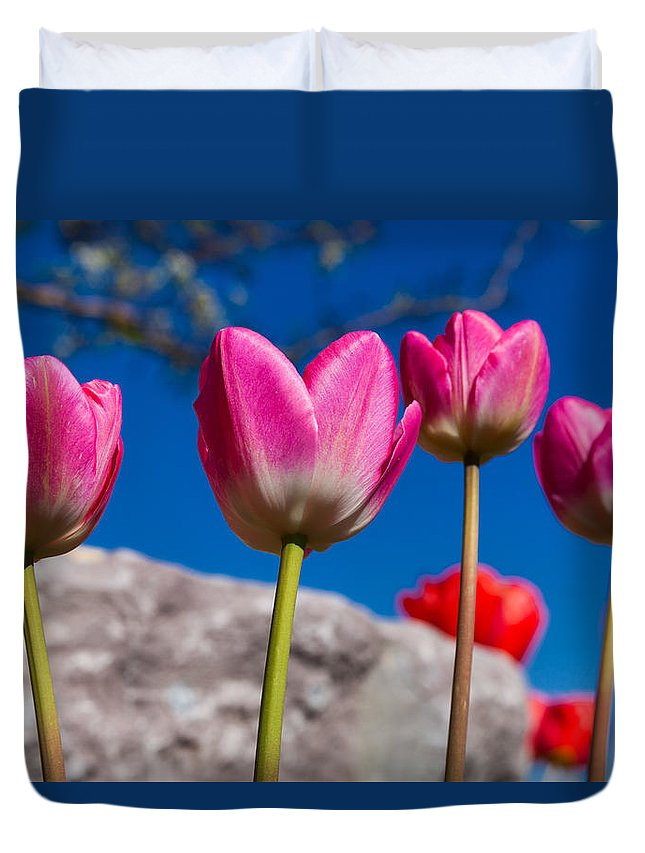 Tulip Revival Duvet Cover featuring the photograph Tulip Revival by Chad Dutson