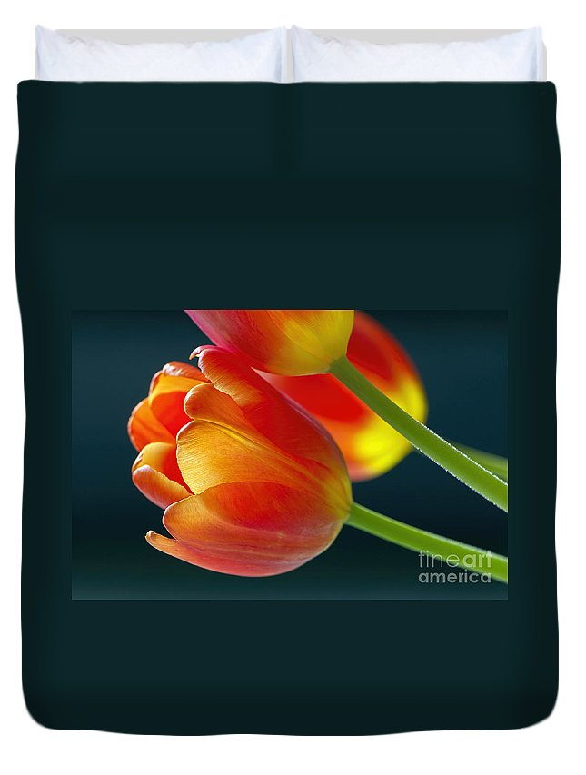 Tulips Duvet Cover featuring the photograph Tulips On Black 2a by Sharon Talson