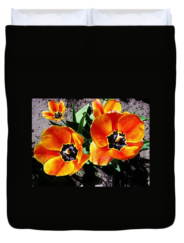 Tulip Duvet Cover featuring the photograph Tulips by Sherman Perry