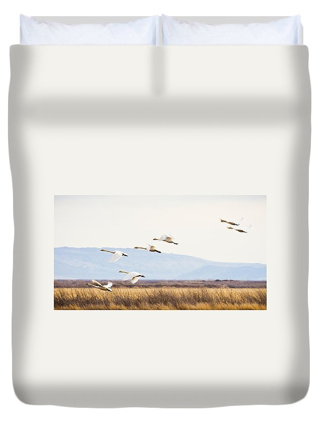 Tundra Swan Duvet Cover featuring the photograph Tundra Swans In Flight by Priya Ghose
