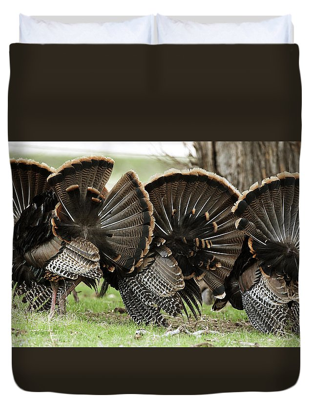 Turkey Duvet Cover featuring the photograph Turkey Butt Strut by Gary Langley