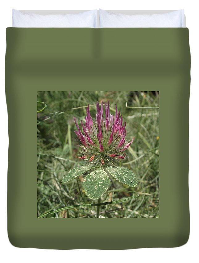 Trifolium Hirtum Duvet Cover featuring the photograph Turkish Rose Clover by Taiche Acrylic Art