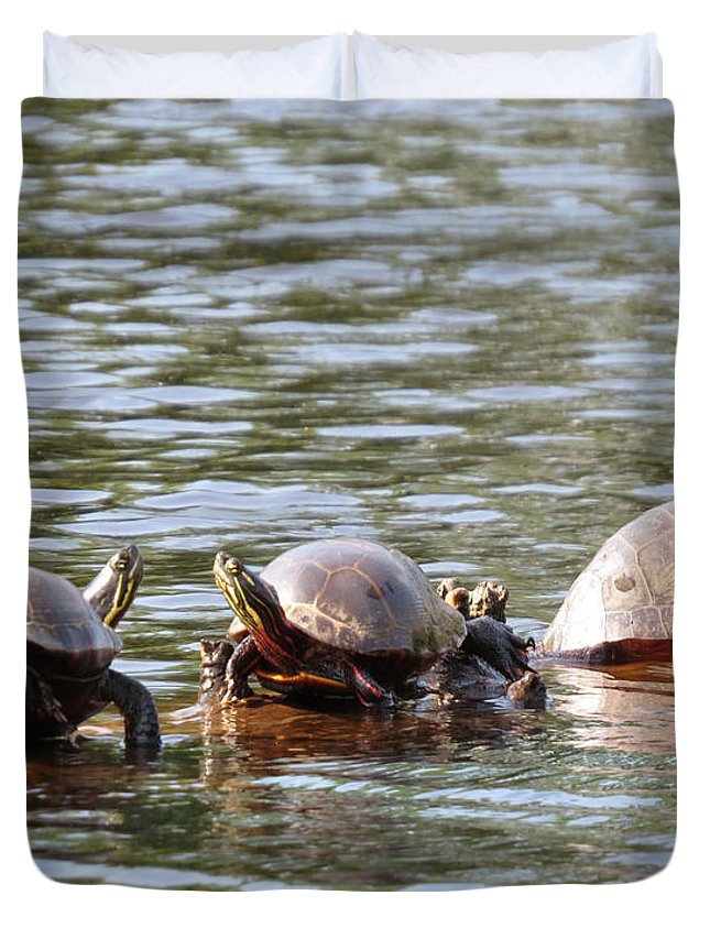 Turtles Duvet Cover featuring the photograph Turtles by Richard Griffis