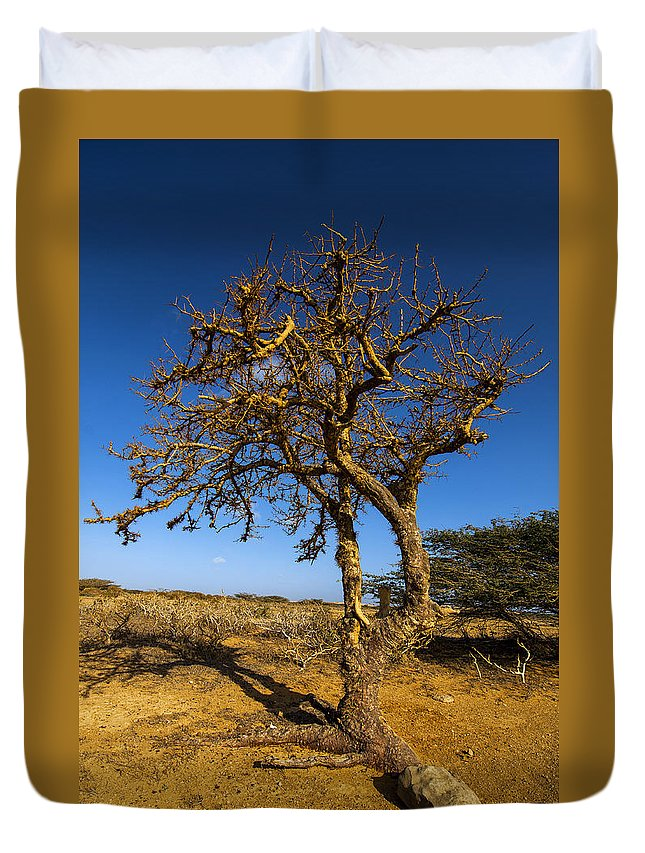 Nature Duvet Cover featuring the photograph Twisted Tree by Jess Kraft