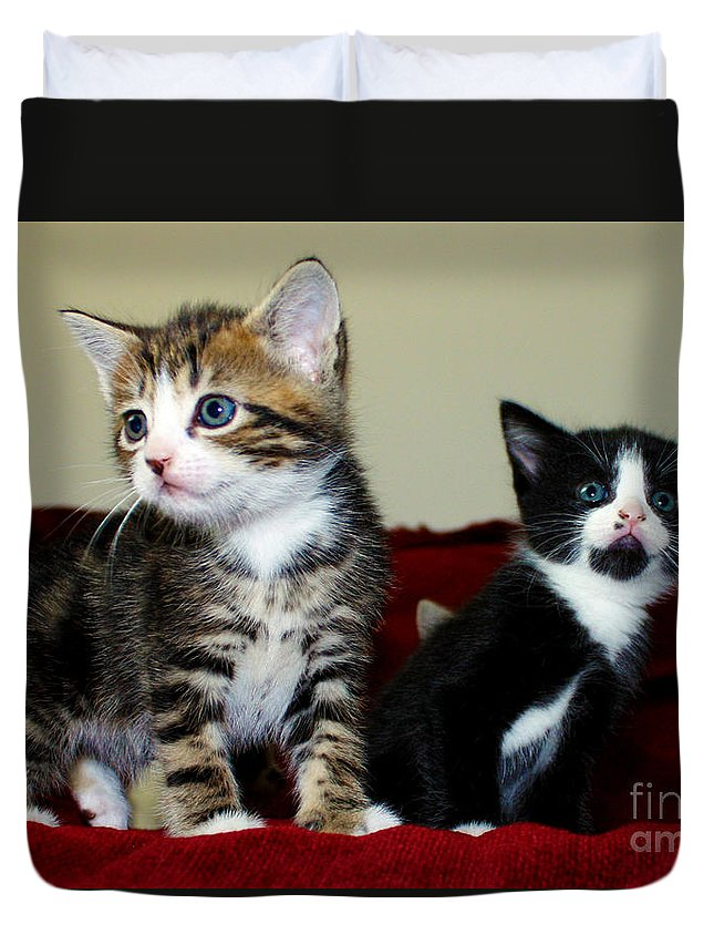 Kitten Duvet Cover featuring the photograph Two Adorable Kittens by Terri Waters