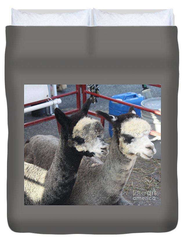 Two Alpacas Duvet Cover featuring the photograph Two Alpacas by John Telfer