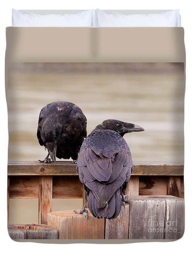 Animal Duvet Cover featuring the photograph Two Common Ravens Corvus Corax Interacting by Stephan Pietzko