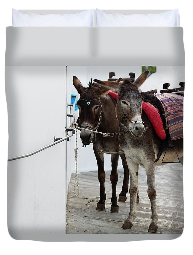Working Animal Duvet Cover featuring the photograph Two Donkeys Tethered In The Street In by Martin Child