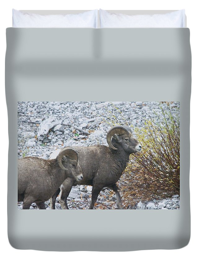 Rams Duvet Cover featuring the photograph Two Male Rams by Jeff Swan