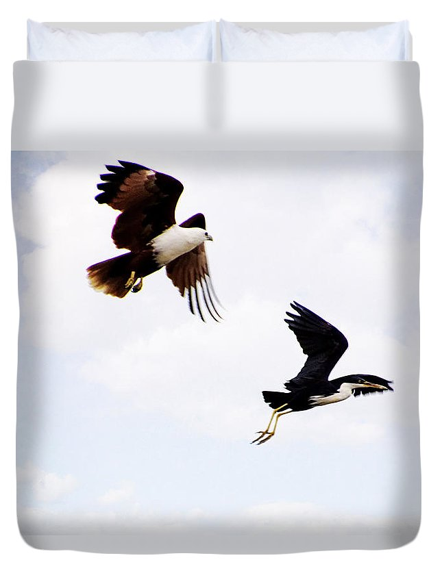 Brahmini Kite Duvet Cover featuring the photograph Two Of A Different Kind V2 by Douglas Barnard