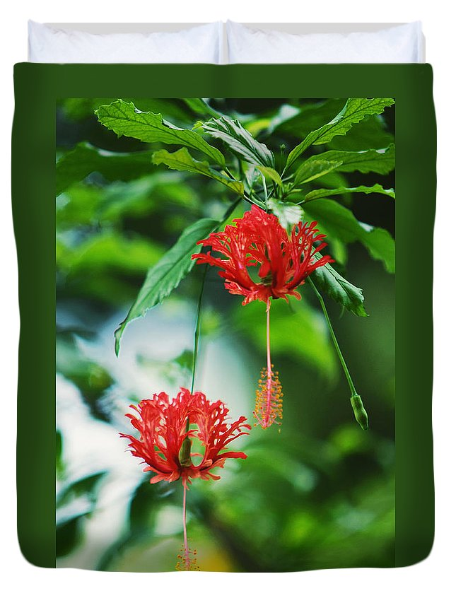 Hibiscus Duvet Cover featuring the photograph Two Red Hibiscus by Jenny Rainbow