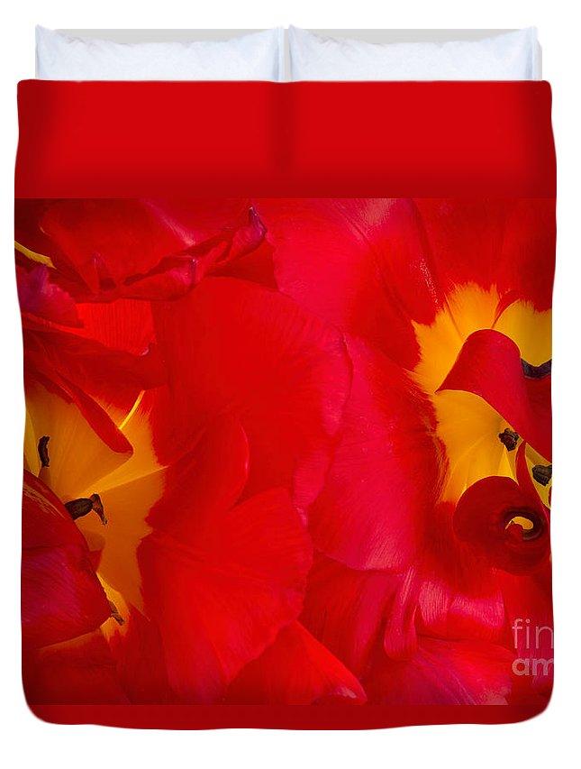 Ann Garrett Duvet Cover featuring the photograph Two Red Tulips by Ann Garrett