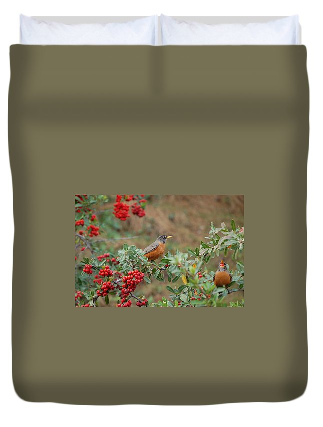 Linda Brody Duvet Cover featuring the photograph Two Robins Eating Berries by Linda Brody