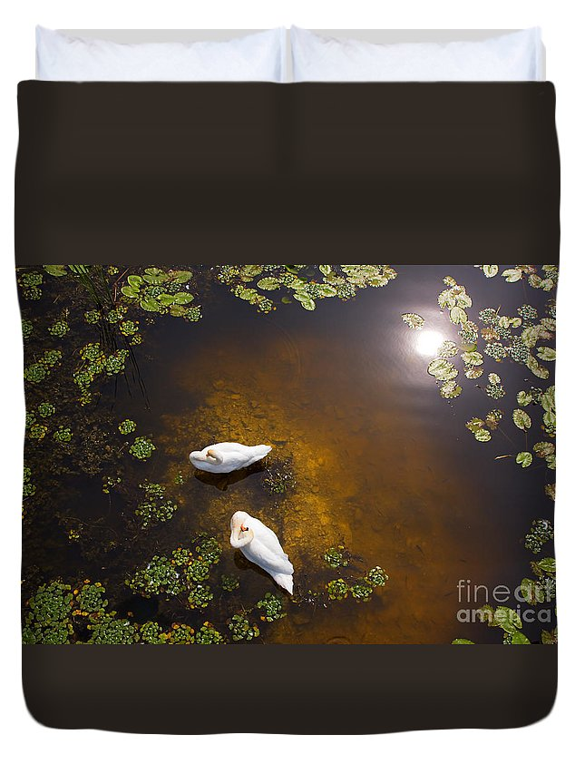 Animal Duvet Cover featuring the photograph Two Swans With Sun Reflection On Shallow Water by Jan Brons