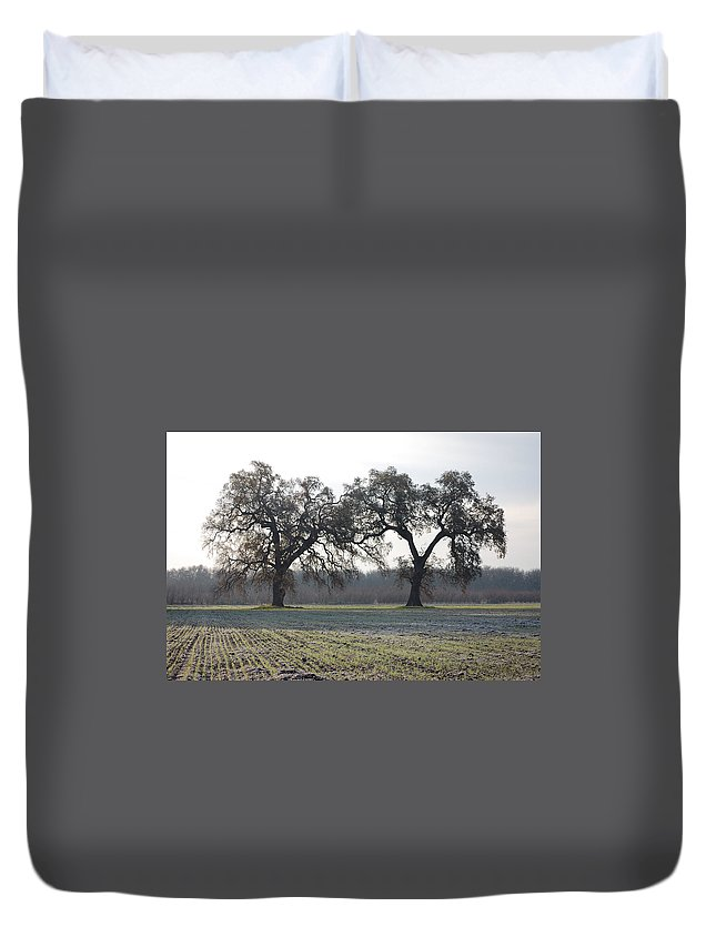 Two Tree Trees Frosty Field Morning Vineyard Vina Ca Duvet Cover featuring the photograph Two Tree Frosty Morning by Holly Blunkall