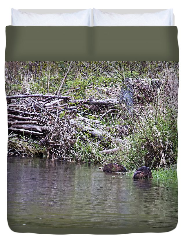 Beaver Duvet Cover featuring the photograph Two Working Beavers by Belinda Greb