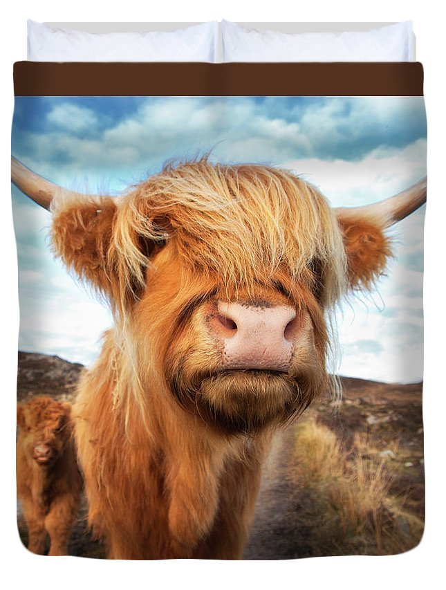 Horned Duvet Cover featuring the photograph Uk, Scotland, Highland Cattle With Calf by Westend61