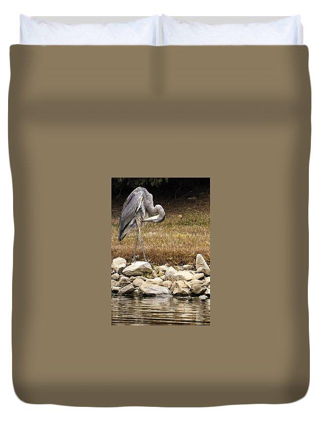 Blue Heron Duvet Cover featuring the photograph Undie Adjustment by Darlene Kwiatkowski