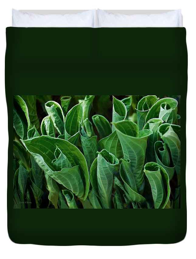 Hosta Duvet Cover featuring the photograph Unfurling Of The Hosta by Sandi OReilly