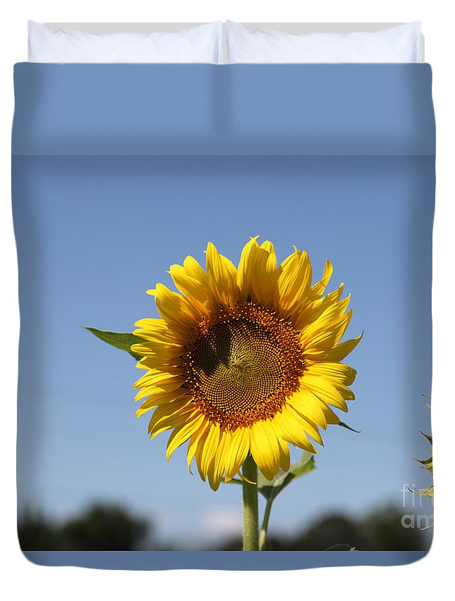 Sunflowers Duvet Cover featuring the photograph United Through Challenge by Amanda Barcon