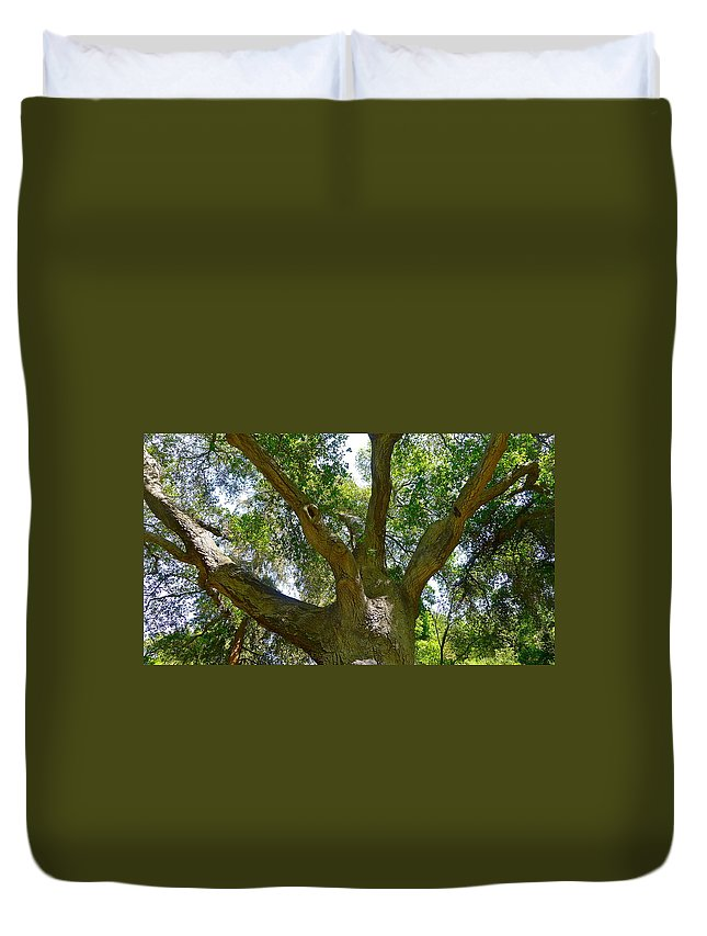 Tree Duvet Cover featuring the photograph Up In The Trees by Denise Mazzocco