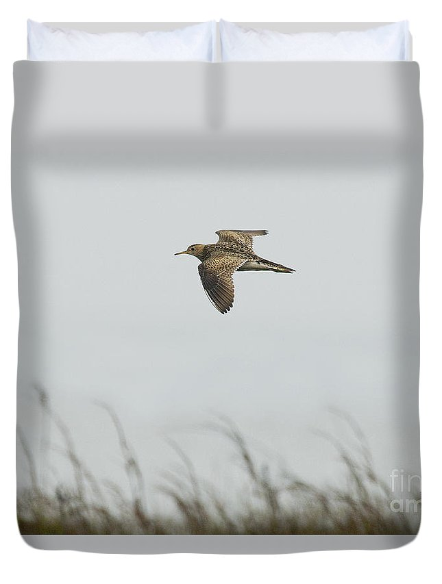 Upland Sandpiper Duvet Cover featuring the photograph Upland Sandpiper by Anthony Mercieca