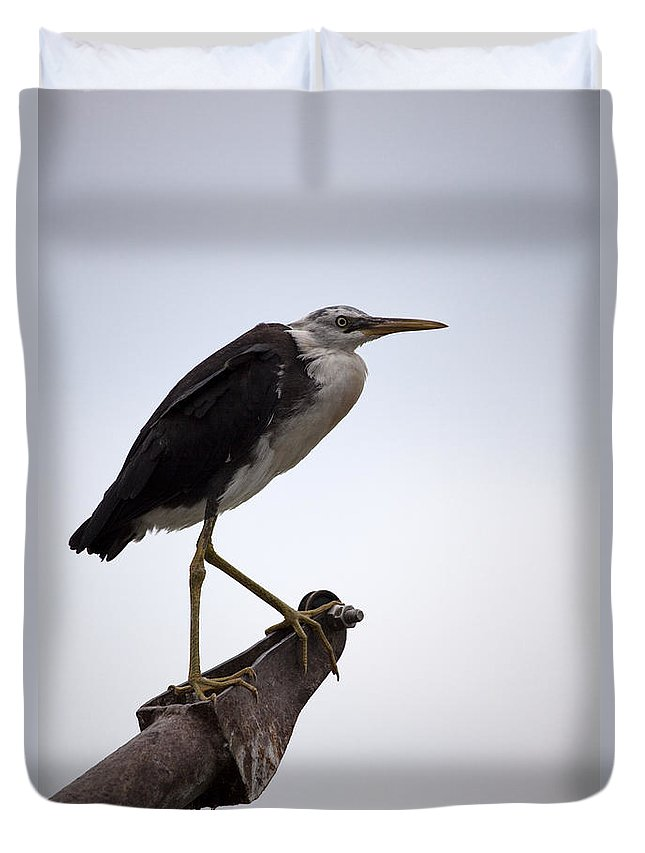 White Necked Heron Duvet Cover featuring the photograph Vantage Point V10 by Douglas Barnard