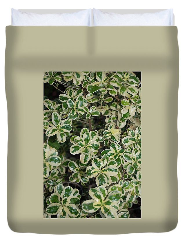 Linda Brody Duvet Cover featuring the photograph Variegated Coprosma Replens by Linda Brody