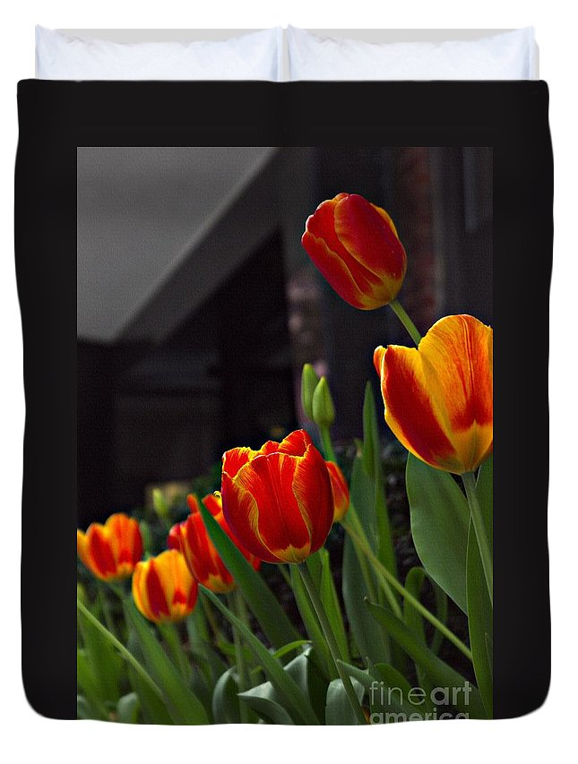 Red And Yellow Variegated Tulips Duvet Cover featuring the photograph Variegated Tulips by Lilliana Mendez