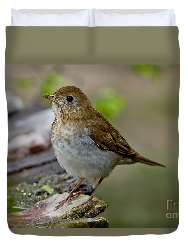 Veery Duvet Cover featuring the photograph Veery by Anthony Mercieca