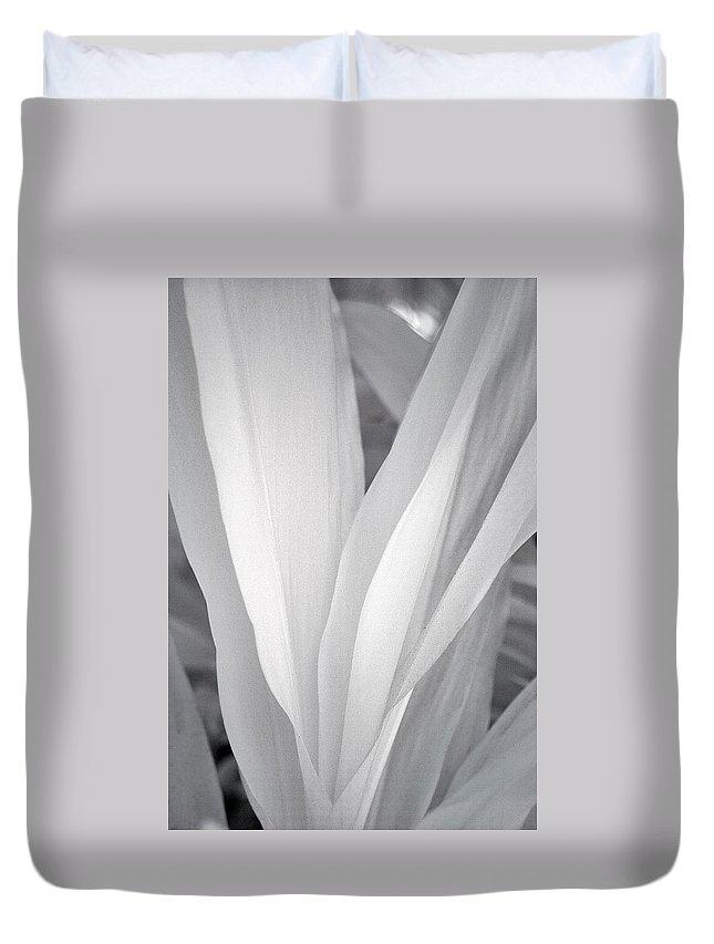 Designs Similar to Veil by Adam Romanowicz