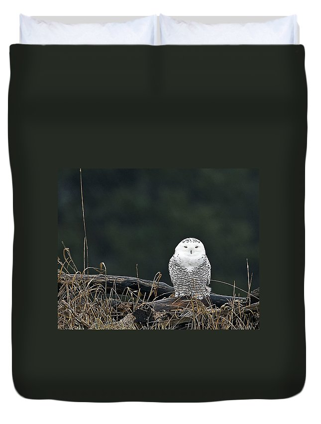 Snowy Owl Duvet Cover featuring the photograph Vermont Snowy Owl by John Vose