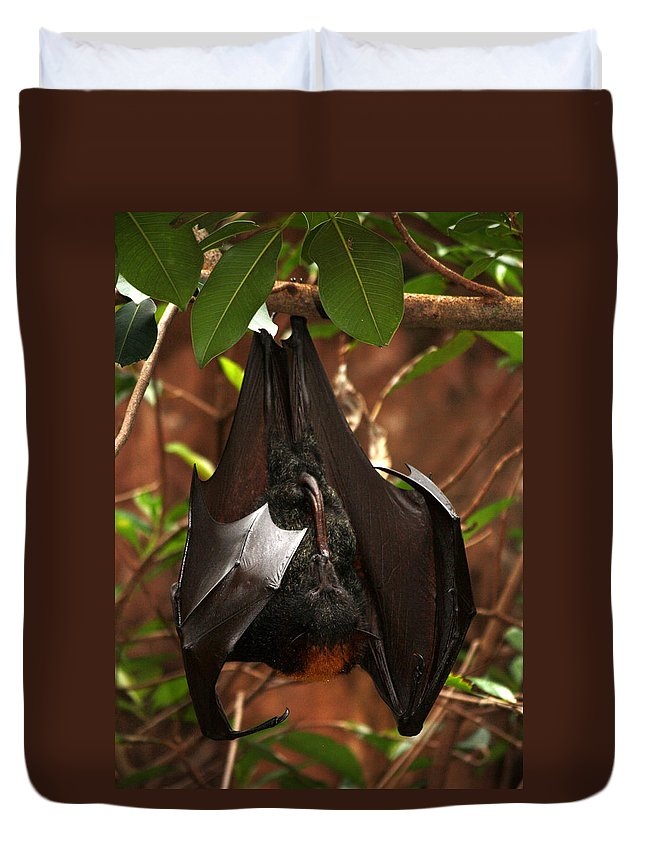 Disney World Duvet Cover featuring the photograph Very Fruity Bat by David Nicholls