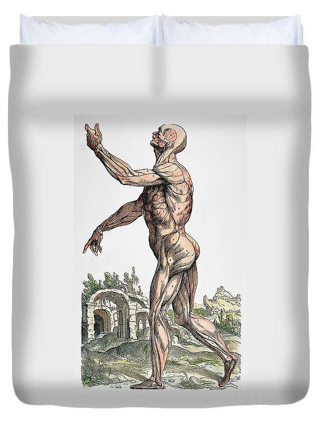 1543 Duvet Cover featuring the photograph Vesalius: Muscles 02, 1543 by Granger