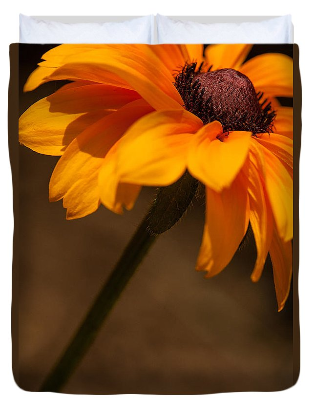 Rudbeckia Duvet Cover featuring the photograph Vibrant Black Eye by Karol Livote